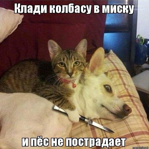 Злі, милі, вірні, кумедні, веселі й безпосередні: 2 липня - Міжнародний день собак, фото-2
