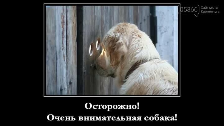 Злі, милі, вірні, кумедні, веселі й безпосередні: 2 липня - Міжнародний день собак, фото-3