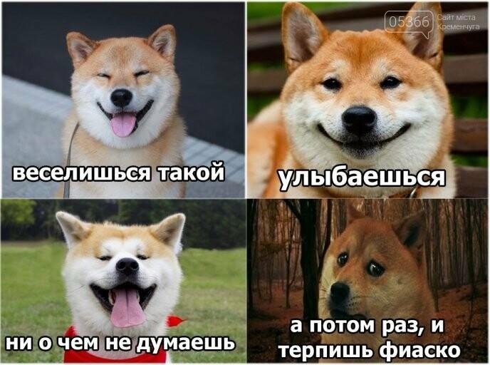 Злі, милі, вірні, кумедні, веселі й безпосередні: 2 липня - Міжнародний день собак, фото-1