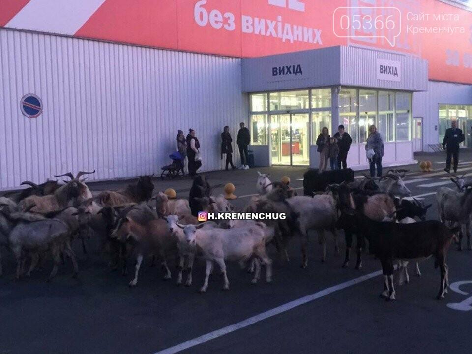 """В Кременчуге возле супермаркета состоялась """"козья туса"""", фото-4"""