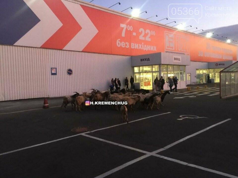 """В Кременчуге возле супермаркета состоялась """"козья туса"""", фото-3"""