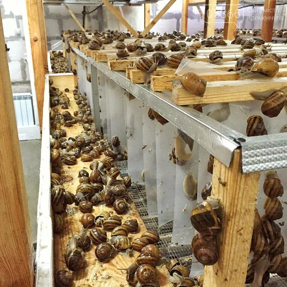 Равликів з ферми на Полтавщини експортують до Іспанії, фото-1
