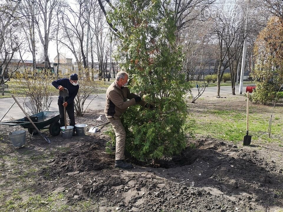 Міський сад озеленюється: робітники висаджують кущі та ялинки. Фото, фото-2