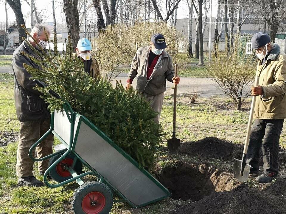 Міський сад озеленюється: робітники висаджують кущі та ялинки. Фото, фото-3
