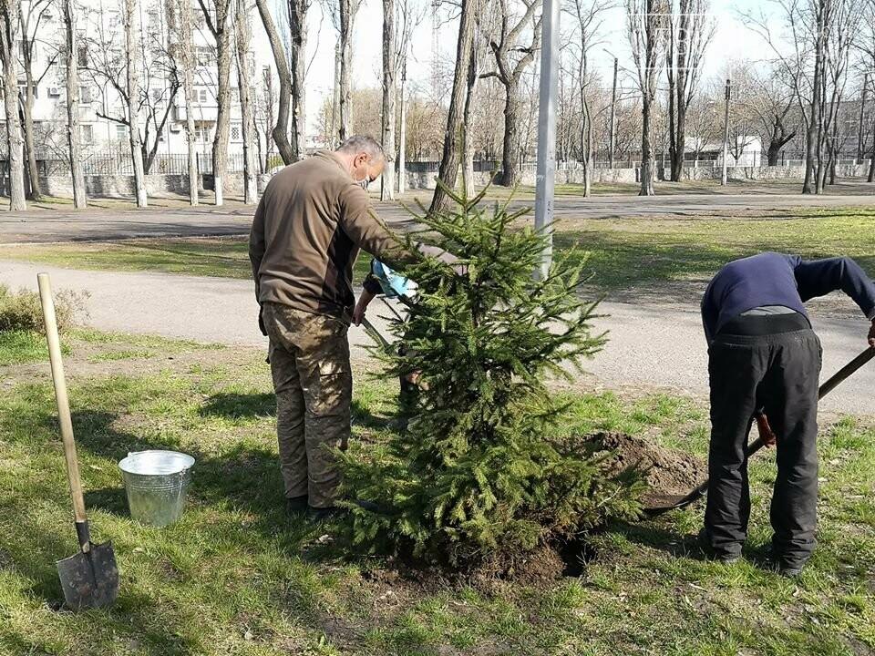 Міський сад озеленюється: робітники висаджують кущі та ялинки. Фото, фото-4