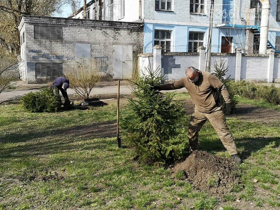 Міський сад озеленюється: робітники висаджують кущі та ялинки. Фото, фото-5