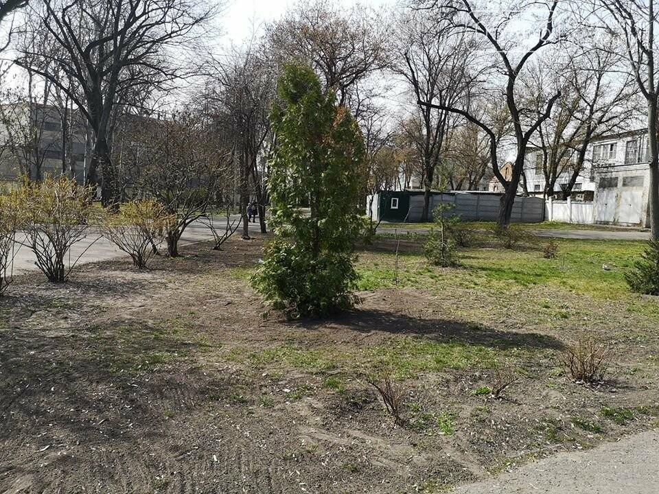 Міський сад озеленюється: робітники висаджують кущі та ялинки. Фото, фото-1