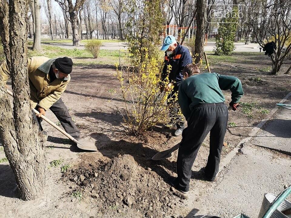 Міський сад озеленюється: робітники висаджують кущі та ялинки. Фото, фото-6