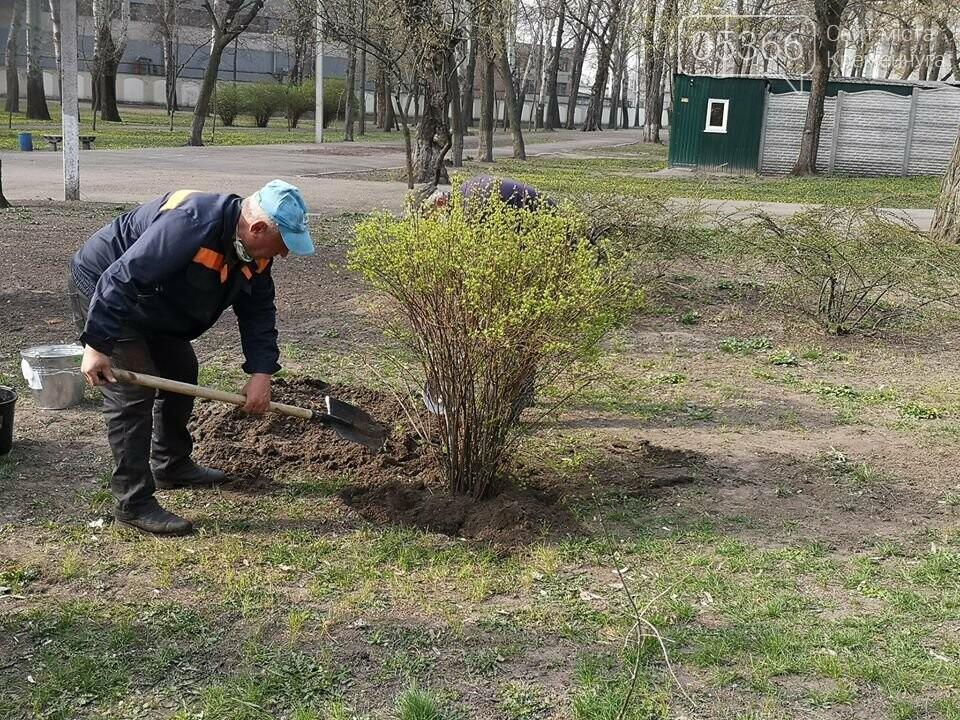 Міський сад озеленюється: робітники висаджують кущі та ялинки. Фото, фото-8