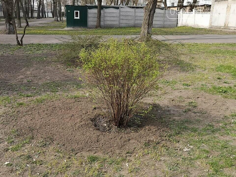 Міський сад озеленюється: робітники висаджують кущі та ялинки. Фото, фото-7