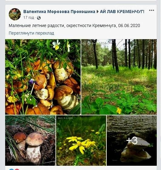 Під Кременчуком знайшли величезну кількість грибів (ФОТО), фото-1