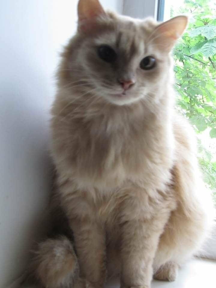 Самосуд над жінкою у Кременчуці: приютіть кота і врятуйте людині життя, фото-1