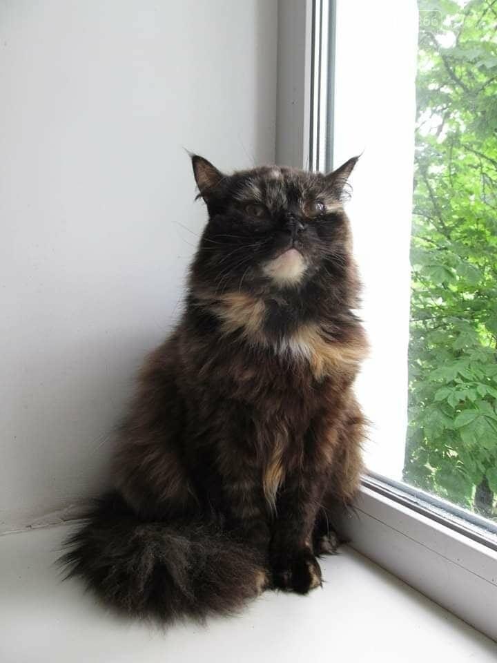 Самосуд над жінкою у Кременчуці: приютіть кота і врятуйте людині життя, фото-2