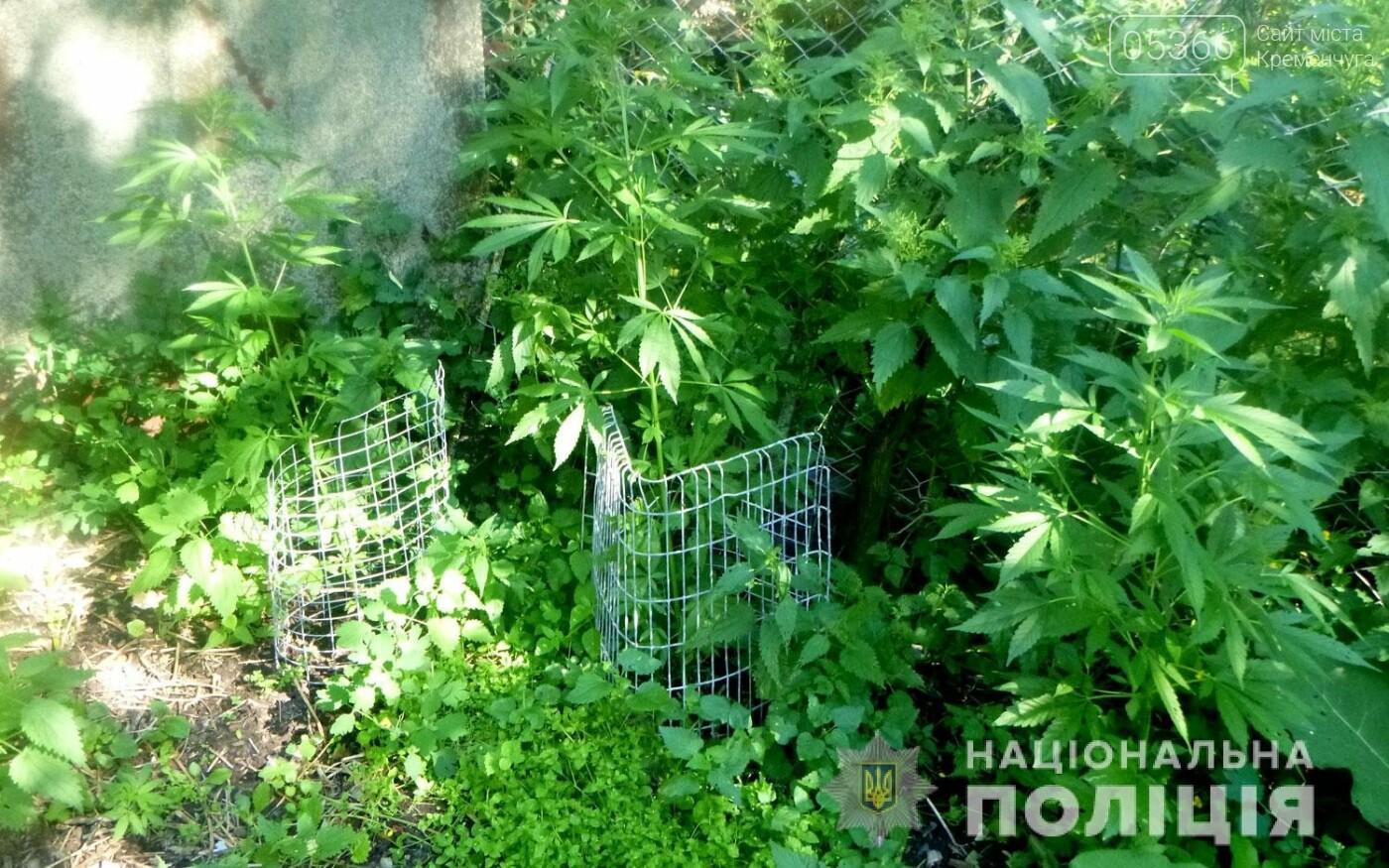 У чоловіка на Полтавщині знайшли кілька сотень конопель, фото-2