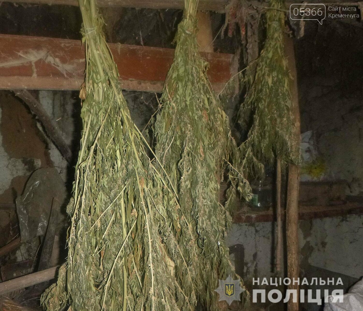 У чоловіка на Полтавщині знайшли кілька сотень конопель, фото-3