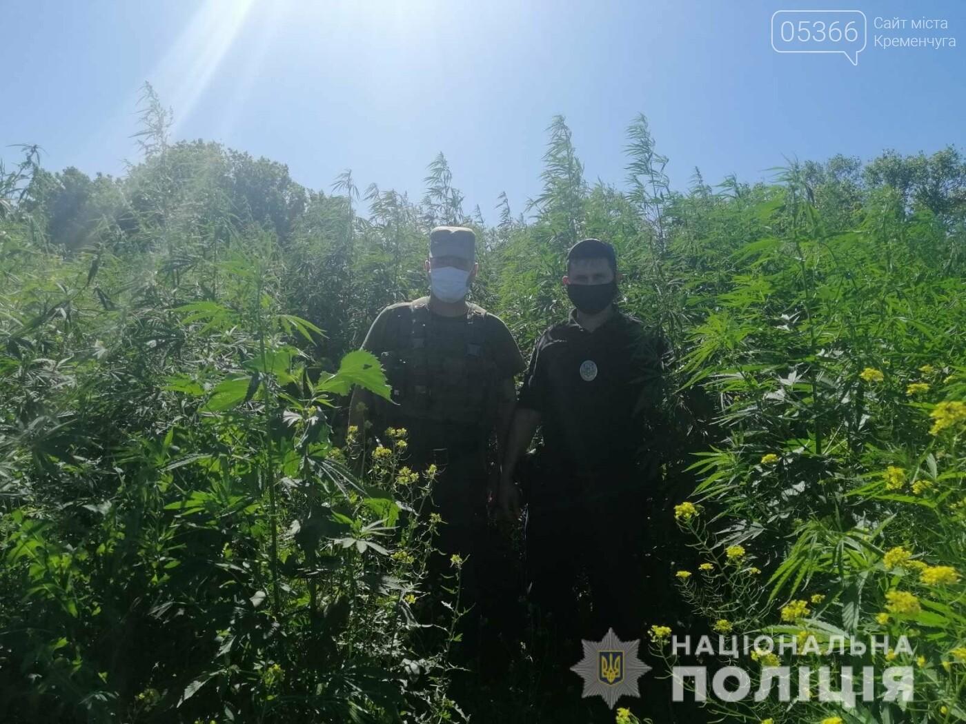 Рай для любителів «травки» створили в Кременчуцькому районі, фото-1