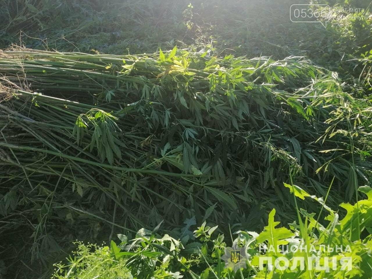 Рай для любителів «травки» створили в Кременчуцькому районі, фото-2