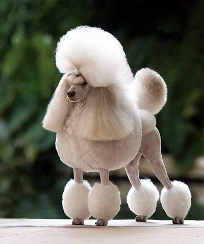 стрижка собак в Кременчуге Groom House
