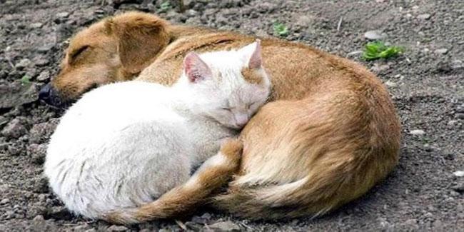 Сьогодні Всесвітній день захисту тварин, фото-1