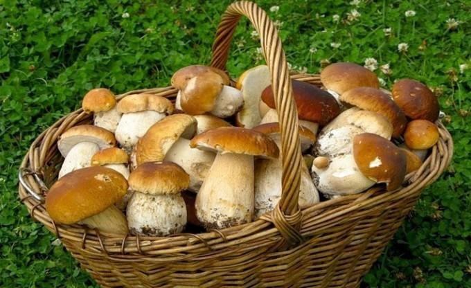 Дикорослими грибами у Кременчуці торгувати заборонено, фото-1