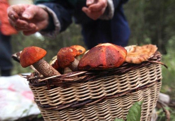 У Кременчуці жінка отруїлася дикорослими грибами , фото-1