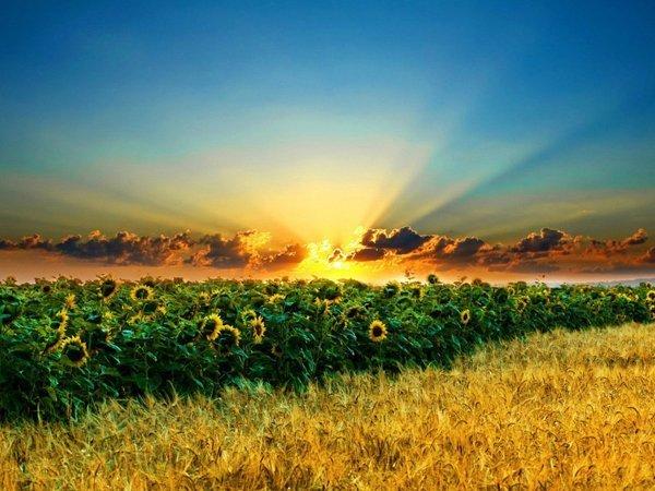 земля для сельского хозяйства