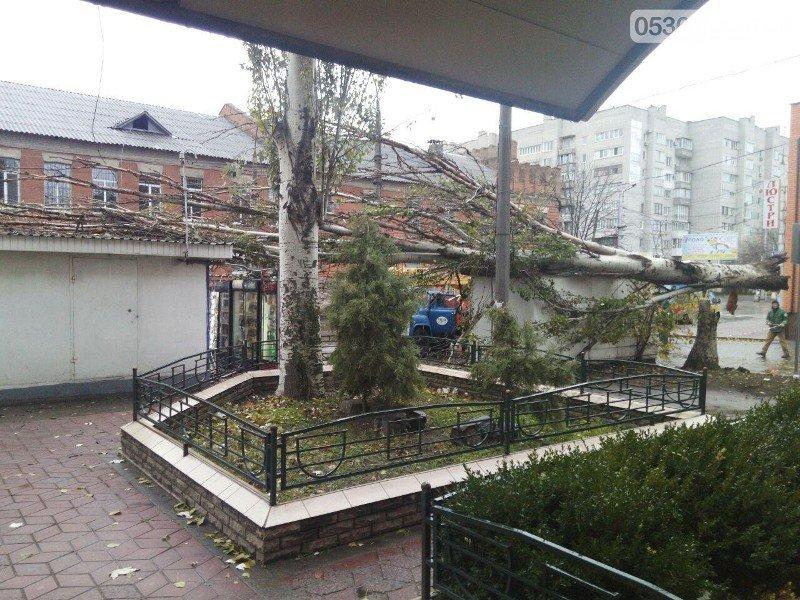 упавшее дерево