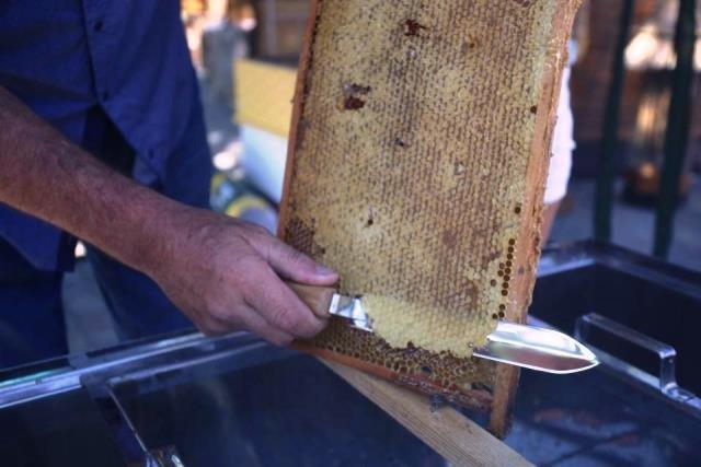 Свято бджолярів