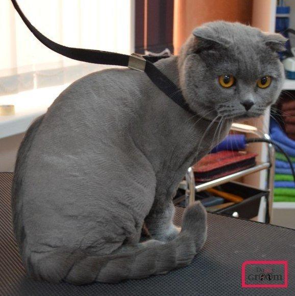 стрижка котов в Кременчуге